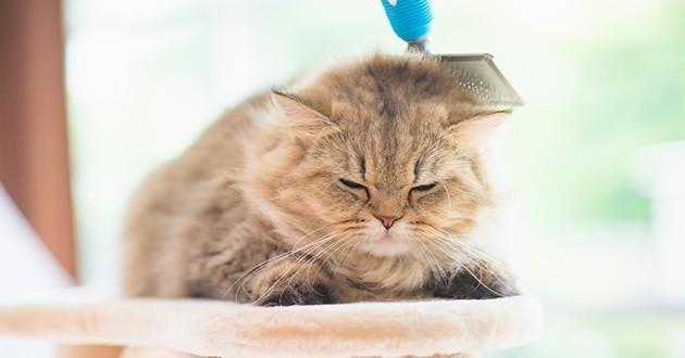 entretenir le poil de son chat