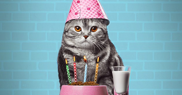 chat 20 ans