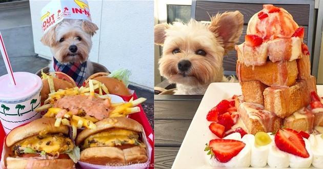 Popeye chien restaurant