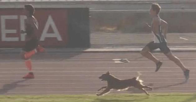 chien qui courre avec les athlètes