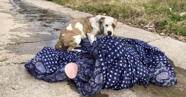 chien au milieu d'une ruelle avec sa couverture
