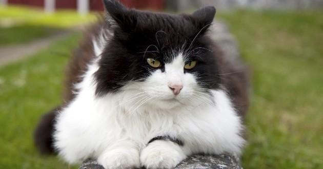 chat perdu rentre en covoiturage