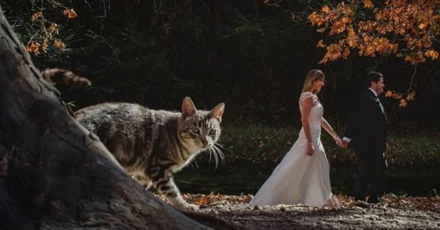 chat à un mariage