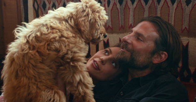 chien a star is born charlie race