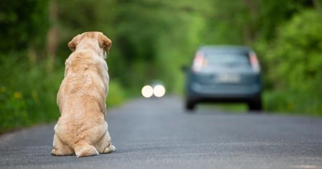 chien abandonné route