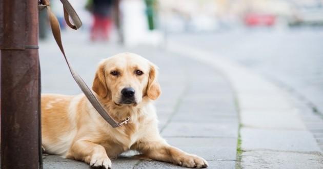 chien animal perdu abandonné