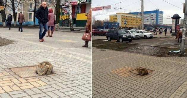 Abandonné, ce pauvre chat revient quotidiennement là où il a été laissé