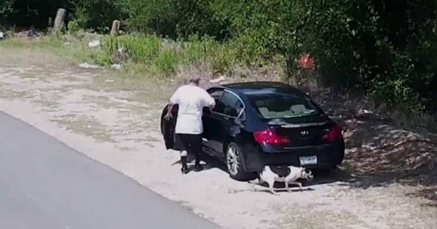 chien abandonné voiture