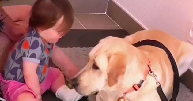 chien-guide d'aveugle