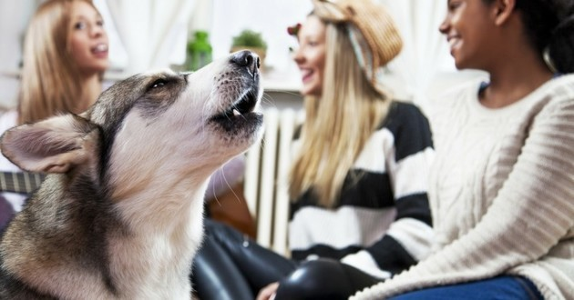 parler à son chien aboiement