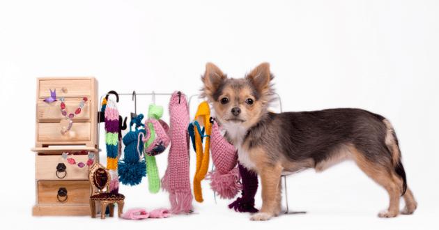 Chiot à côté d'une garde robe pour chien