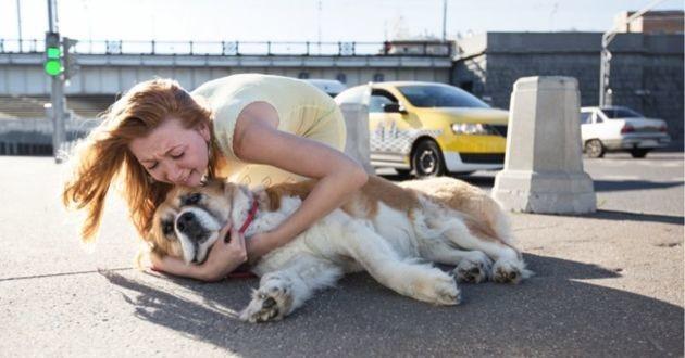 un chien qui a subi un accident sur la route
