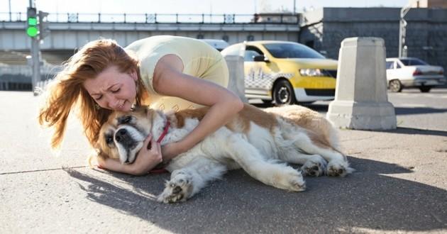accident chien vétérinaire