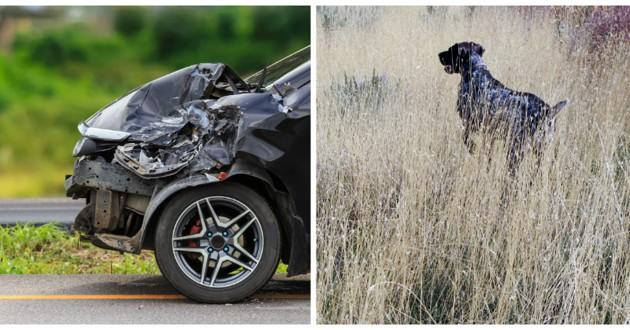 accident voiture chien