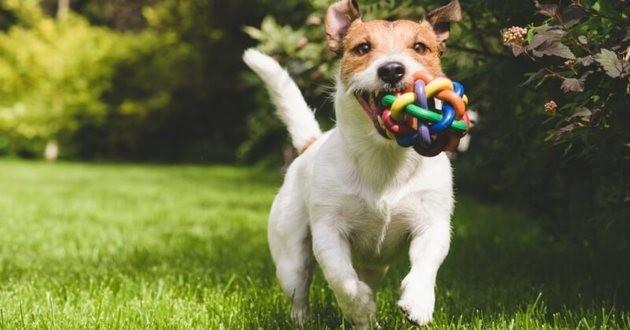 Top 5 des activités que les chiens adorent