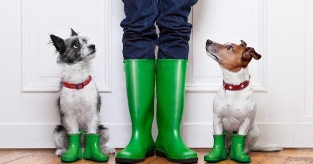 jouer avec son chien quand il pleut