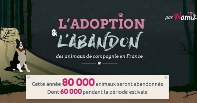 Infographie Wamiz abandon adoption