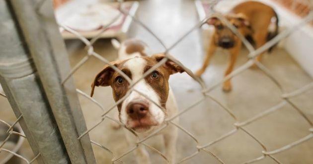 chiens dans un refuge