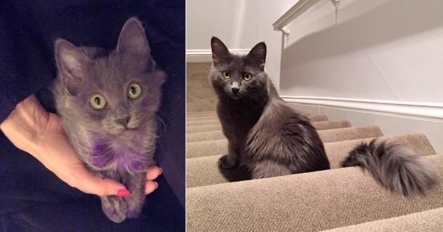 Chaton violet adopté