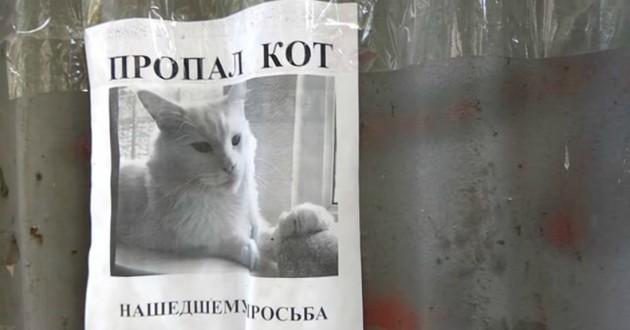 affiche chat perdu blanc