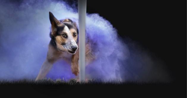 chien agility poudre colorée