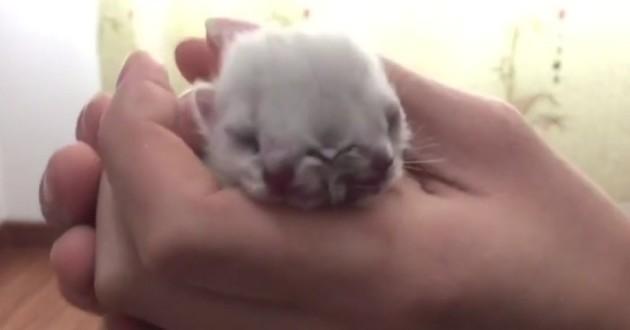 Akamaru chat à deux têtes
