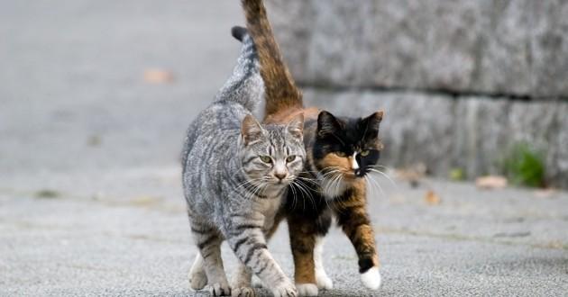 héritage aux chats errants