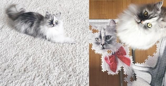 Alice le chat qui fait craquer le Web