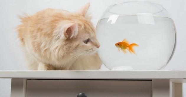 aliments dangereux toxiques pour les chats