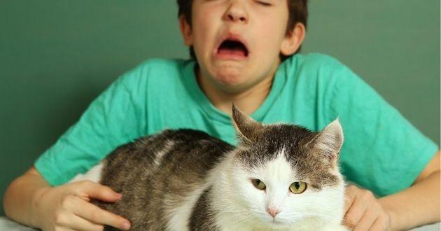 garçon allergique aux chats