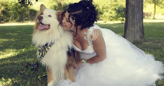 amour chien maître