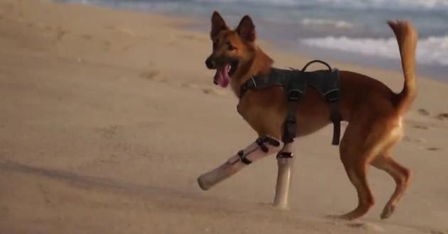 chien amputé prothèses