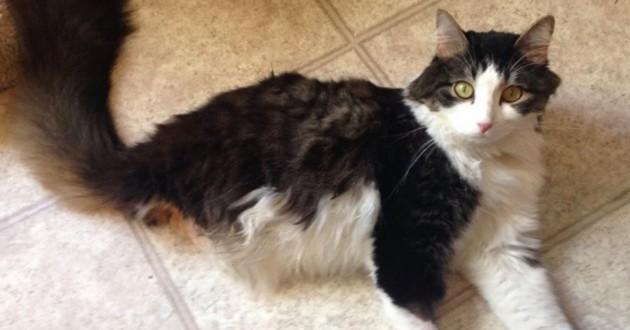 chat deux pattes impressionnant