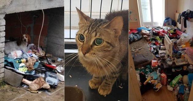 des animaux maltraités saisis à leurs propriétaires