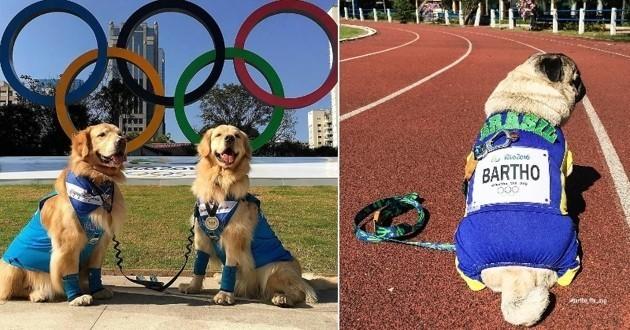 chiens jeux olympiques