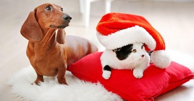 chat chien lapin cadeau de Noël