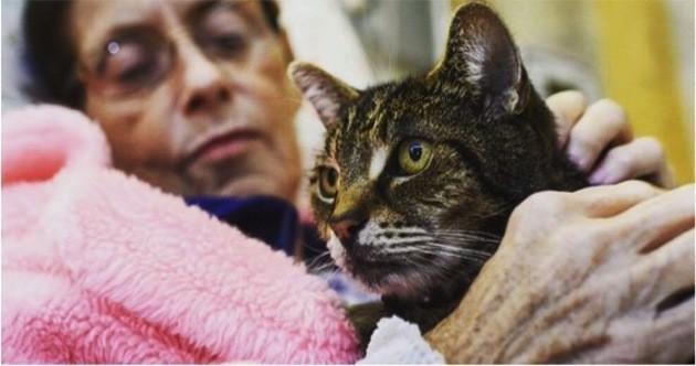 Un hôpital révolutionnaire accueille chats et autres poilus pour le bien-être de ses patients !