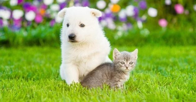 amitié chien chat dehors