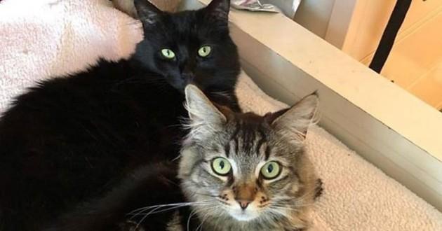 Deux chats louent un studio à 1500 dollars par mois !