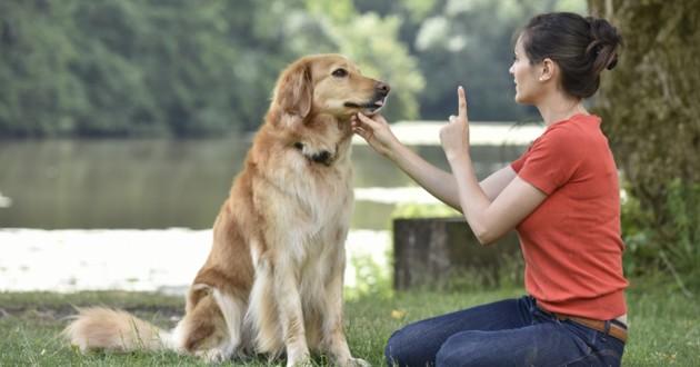 quoi apprendre à son chien