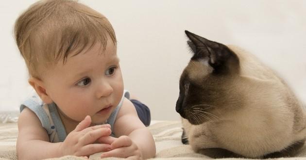 Révolution : chats et chiens peuvent maintenant parler avec vous grâce à un médicament miracle