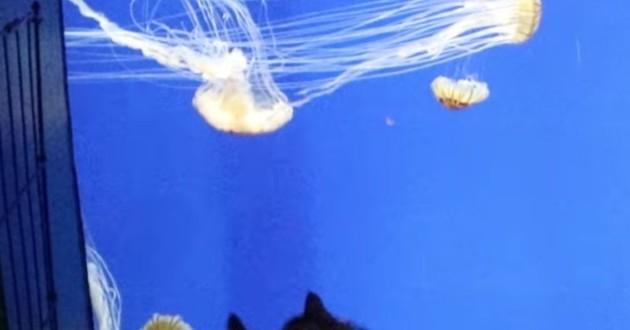Aquarium et chats