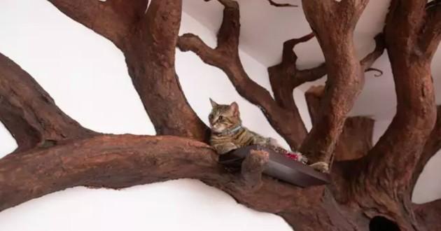 arbre à chat en bois géant