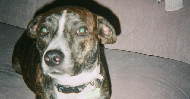 Ariana Grande fait la plus adorable des choses pour le chien de son ex décédé