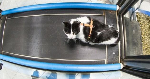 chat en séance d'ydrothérapie