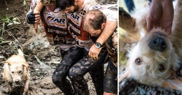 Chien errant Adventure Racing World Championship