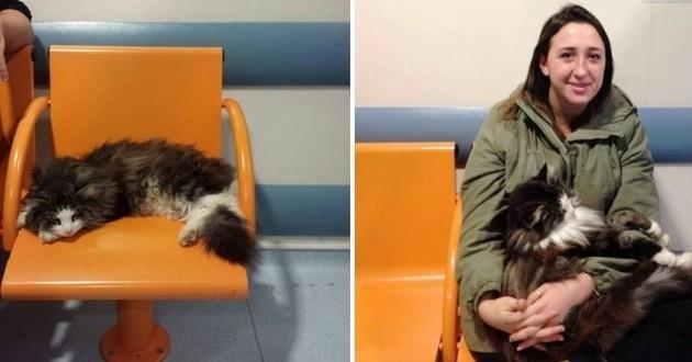 Un chat se rend régulièrement dans un hôpital de Londres pour offrir des câlins aux patients