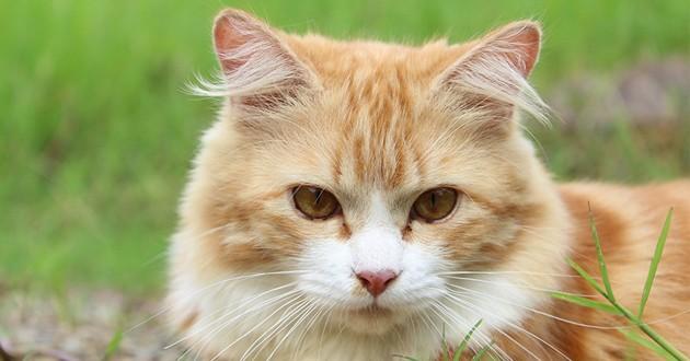 Anti-puce pour chat : 3 bons plans à ne pas rater sur Cdiscount !