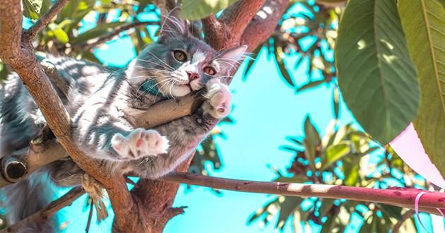 Un chat dans un arbre