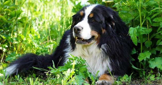 Collier anti-puce pour chien : 3 bons plans à saisir !